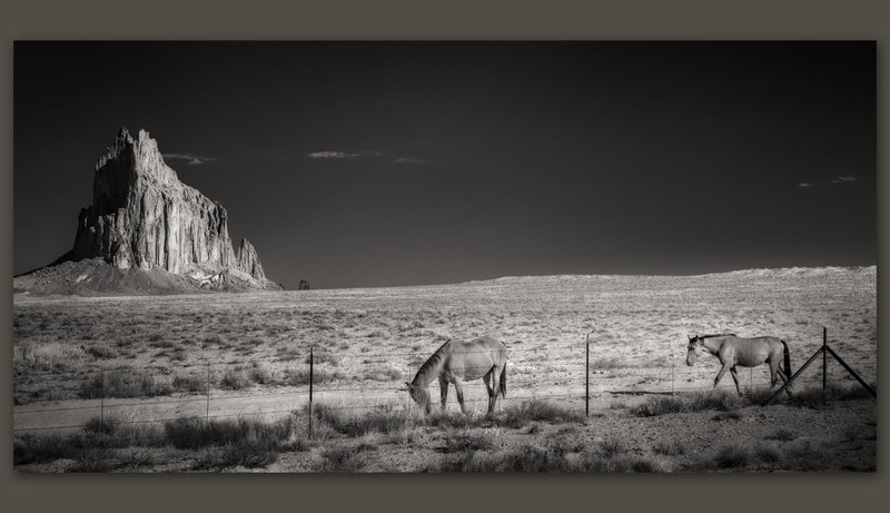 Horses at Shiprock, New Mexico