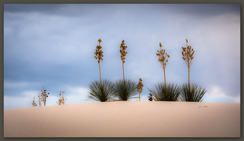 White Sands #3, New Mexico