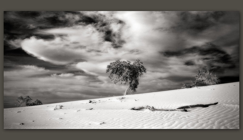 Tree, White Sands, New Mexico