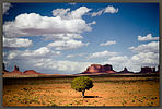 Tree, Monument Valley, Arizona